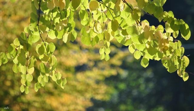 Vuon Nhat in Oregon 2014 (305)